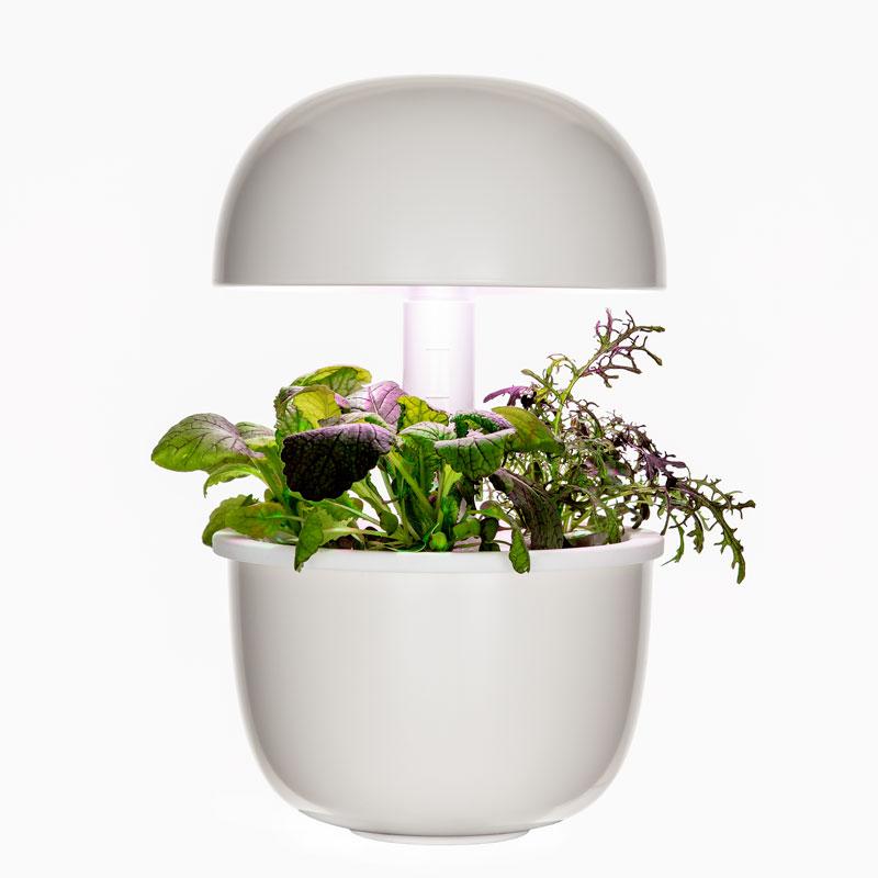 Plantui 3e, ホワイト