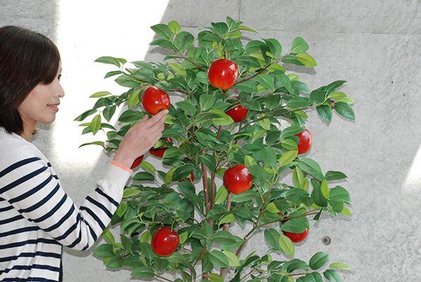 送料無料 夢が実る 贈り物 リンゴの木 リンゴ 人工観葉植物 りんご 造花 フェイクグリーン 造花 りんごの木 ディスプレイ リンゴ フェイク インテリア 置物 人工観葉植物 光触媒 空気清浄 りんご ツリー 写真館 SNS 撮影 フォトジェニック インテリア メルヘン
