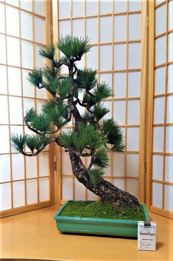 【造花松】【手作り】【造花松盆栽】 1点物