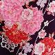 格安!袴レンタル 成人式 卒業式 カンサイ紫地ピンクの牡丹 L 【送料無料】 st21