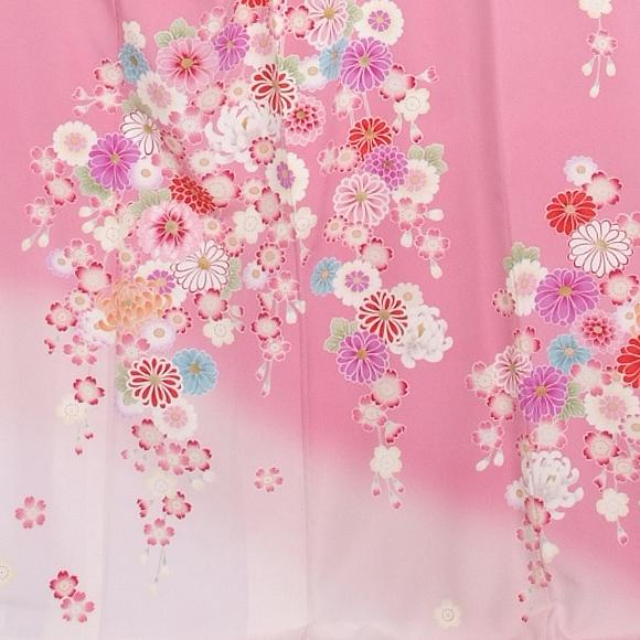 格安!振袖レンタル 成人式  ピンクぼかしに小菊 【送料無料】【試着可能】51148