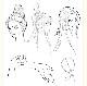 古風図譜集 古風手絵線稿素材800例 大人の塗り絵 中国語版書籍 /古风图谱集 古风手绘线稿素材800例