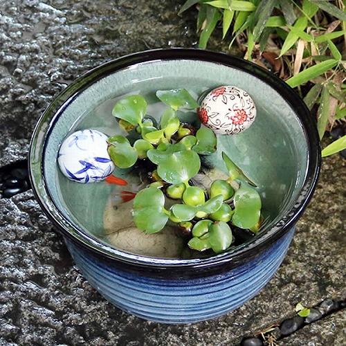 10号藍の色睡蓮鉢 信楽焼 金魚鉢、メダカ鉢にお勧め[su-0107]