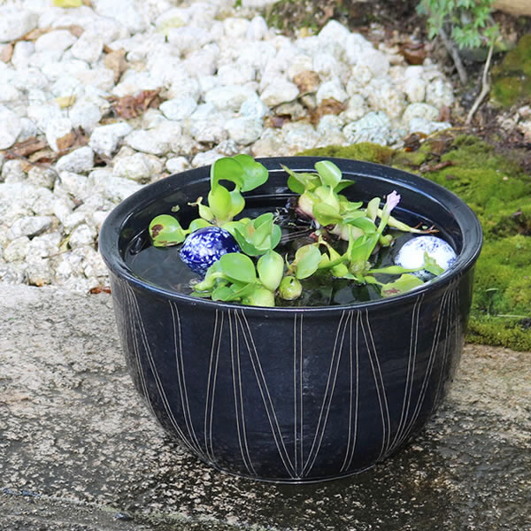 水鉢 信楽焼 金魚鉢、メダカ鉢にお勧め 陶器スイレン鉢 手水鉢 めだか鉢