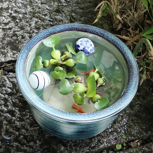 10号みなも睡蓮鉢 信楽焼 金魚鉢、メダカ鉢にお勧め[su-0106]