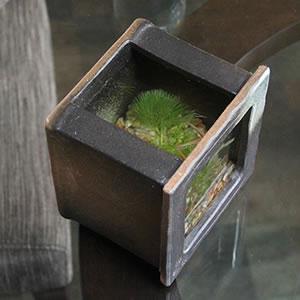 ミニサイズ 陶器水槽 信楽焼の角型水槽(茶)[su-0212]