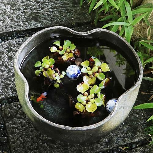 手ひねり水鉢 信楽焼すいれん鉢 金魚鉢、メダカ鉢にもお勧め! 陶器スイレン鉢[su-0217]