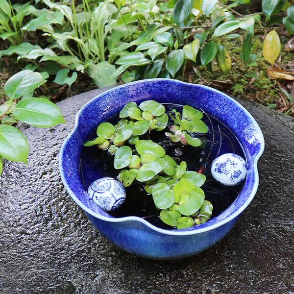 青ビードロ花型水鉢 信楽焼 金魚鉢、メダカ鉢にお勧め 陶器 めだか鉢 スイレン鉢 [su-0271]