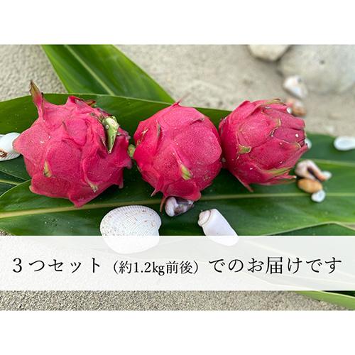 【期間限定】奄美大島産ドラゴンフルーツ