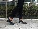 No.29512(ブラック)|軽く・柔らかい履き心地で優しく足を包み込んでくれるパンプス