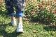 No.10806(オフホワイト、ブラック、ダークブルー、チョコ)ハイミセスに大人気!上品なセパレート足首ベルトタイプサンダル