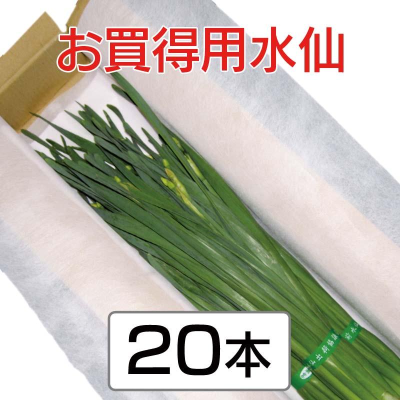 お買得用水仙 (35cm以上 3〜4枚葉指定なし) 20本