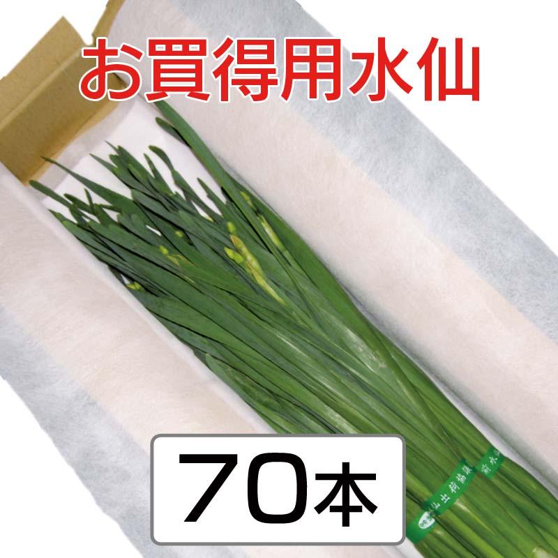 お買得用水仙 (35cm以上 3〜4枚葉指定なし) 70本