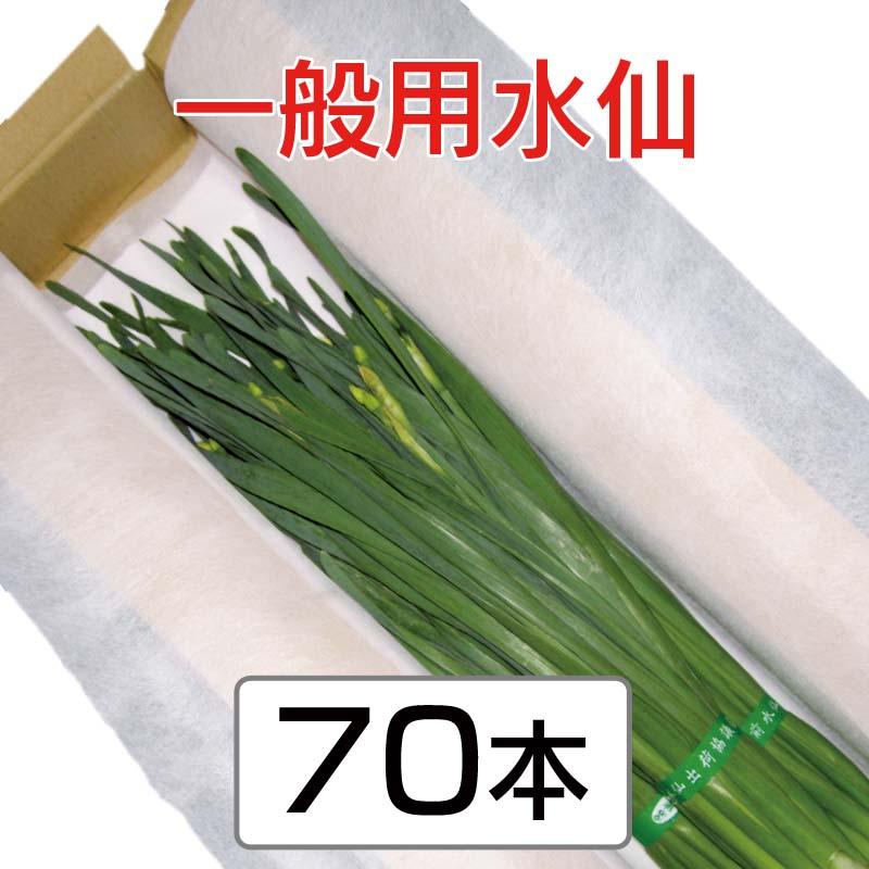 一般用水仙 (45cm以上 3〜4枚葉指定なし) 70本