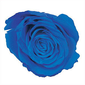 着色剤 『プリザーブドフラワー ミスティー 着色液 500ml ブルー』 松村工芸