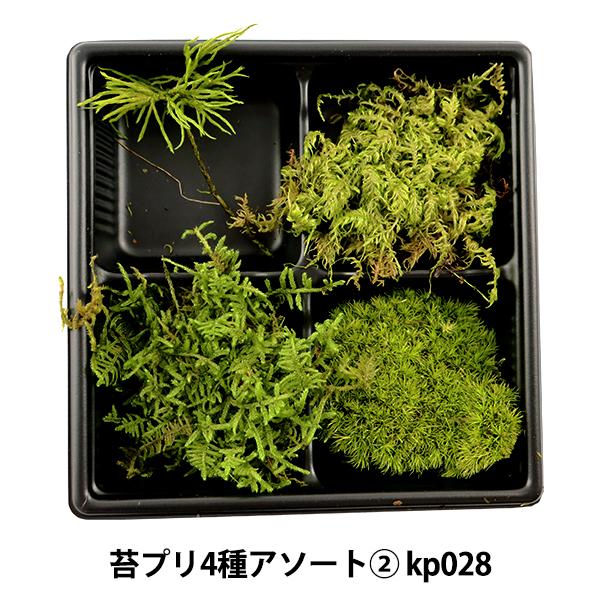 プリザーブド 『苔プリザーブド4種アソート� kp028』 そらプリ sorapuri