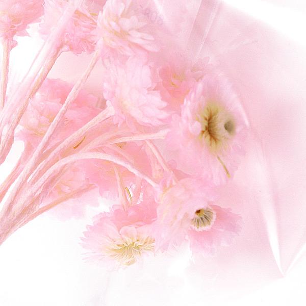 『ソフトイモーテル』 1g ピンク
