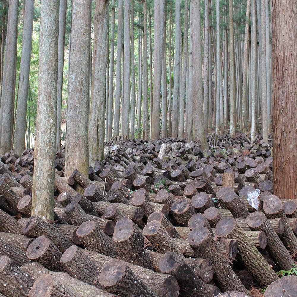吉野の原木生しいたけ