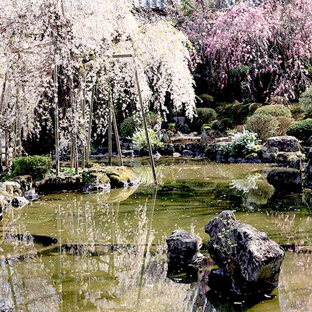 『竹林院 群芳園』デラックス宿泊プラン(1泊2食 2名様)