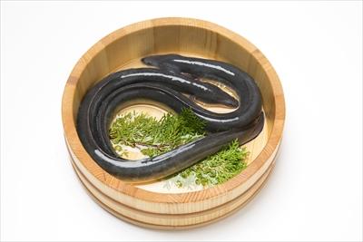 国産 静岡県産 うなぎ の 蒲焼 80g×5 (タレ+山椒付き)