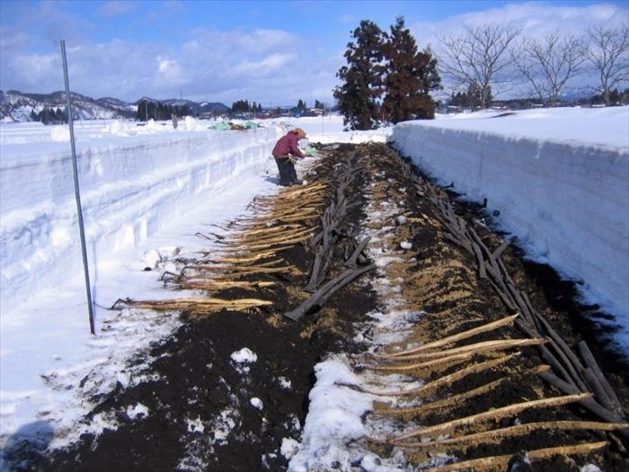 山形県産 雪国育ちの 自然薯 1kg