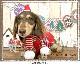 【わんちゃんにも可愛いクリスマス】チアフルフレンズ  ボーダーマフラーL