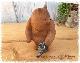 レジン ダッドベアー 【クマの置物 ガーデン くまさん】