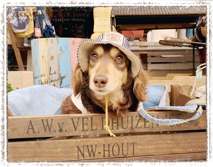 ハンドメイド わんこの帽子 クロッシェハット