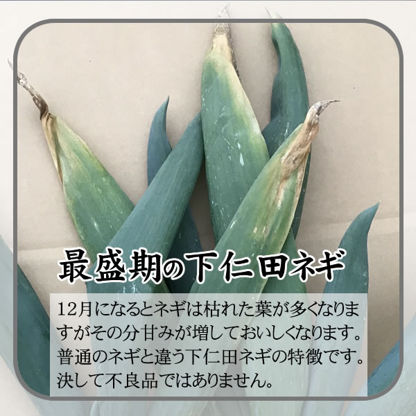 下仁田ねぎNN-52【送料無料】【Z】