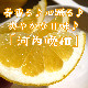 【4月上旬〜柑橘】「河内晩柑」
