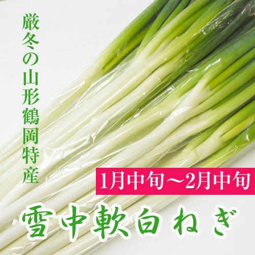 【1月中旬〜】「雪中軟白ねぎ」3P