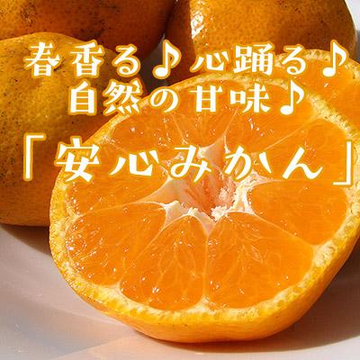 【1月上旬】安心みかん(愛媛・無茶々園)
