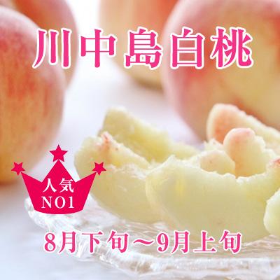 【2021年8月下旬〜】おいしい桃「川中島白桃」