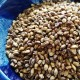 【食物繊維豊富!】無農薬「紫もち麦」(皮付きもち麦)300g(同梱用)