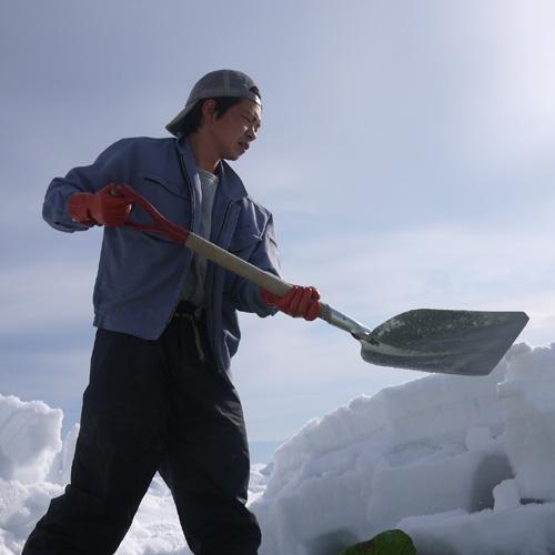 【1月上旬〜】やまがた雪ノ下野菜「あまごいキャベツ」1.2kg〜