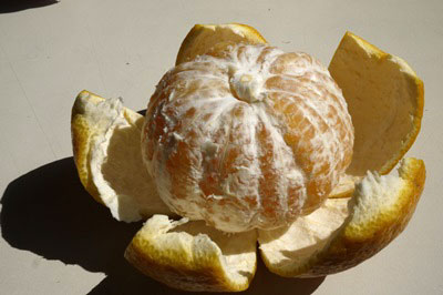 【3月中旬〜の柑橘】 「甘夏・あまなつ」3玉前後・1kg