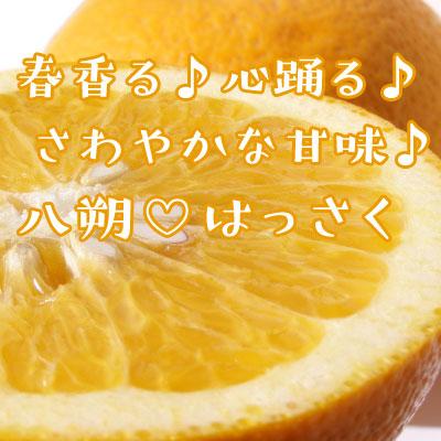 【2月中旬〜の柑橘】「八朔・はっさく」