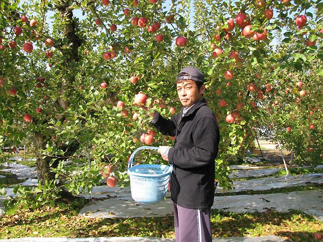 【11月中旬〜】甘くておいしい「ふじりんご」