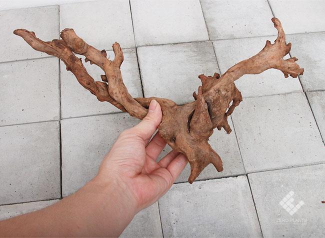Drift Wood / ドリフトウッド 【 マングローブ / M / 1本 】 [ パルダリウム、コケリウムのレイアウトに最適な流木 ]