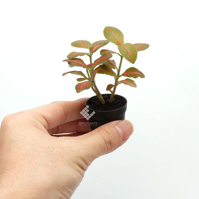 """フィットニア """" スケルトン """" 1ポット 【 ビバリウム、パルダリウムに使いやすい植物 】"""