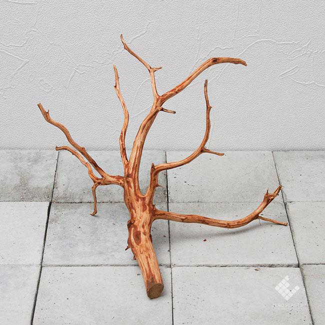 Drift Wood / ドリフトウッド 【 ブラウン / M / DW-006 】 [ パルダリウム、コケリウムのレイアウトに最適な流木 ]
