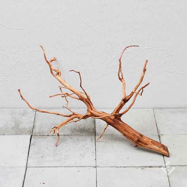 Drift Wood / ドリフトウッド 【 ブラウン / M / DW-012 】 [ パルダリウム、コケリウムのレイアウトに最適な流木 ]