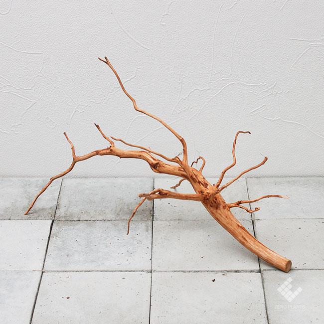 Drift Wood / ドリフトウッド 【 ブラウン / M / DW-013 】 [ パルダリウム、コケリウムのレイアウトに最適な流木 ]