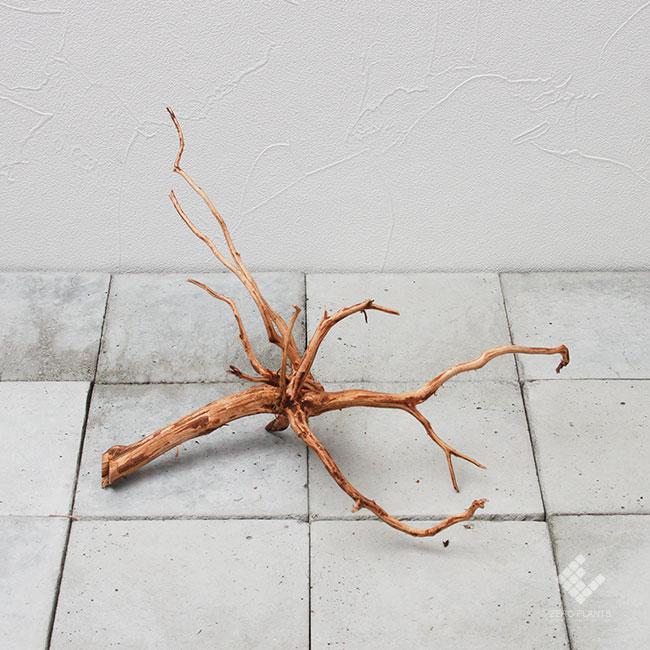 Drift Wood / ドリフトウッド 【 ブラウン / MS / DW-014 】 [ パルダリウム、コケリウムのレイアウトに最適な流木 ]