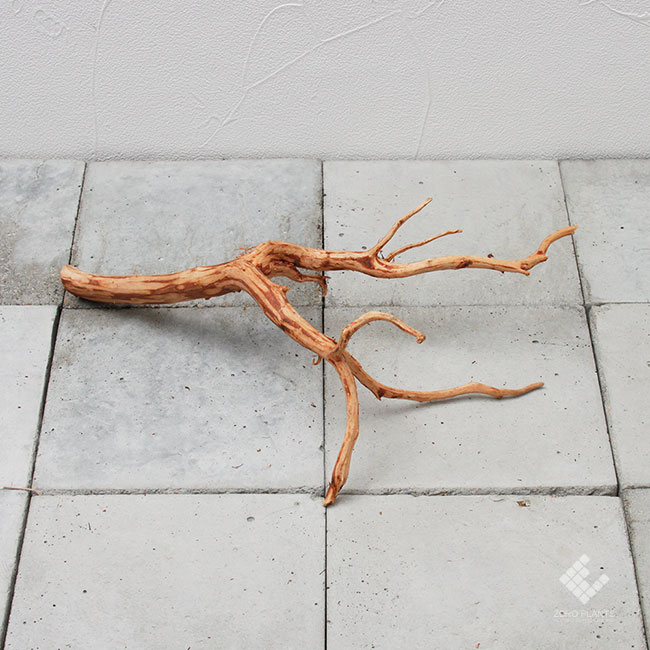 Drift Wood / ドリフトウッド 【 ブラウン / S / DW-016 】 [ パルダリウム、コケリウムのレイアウトに最適な流木 ]