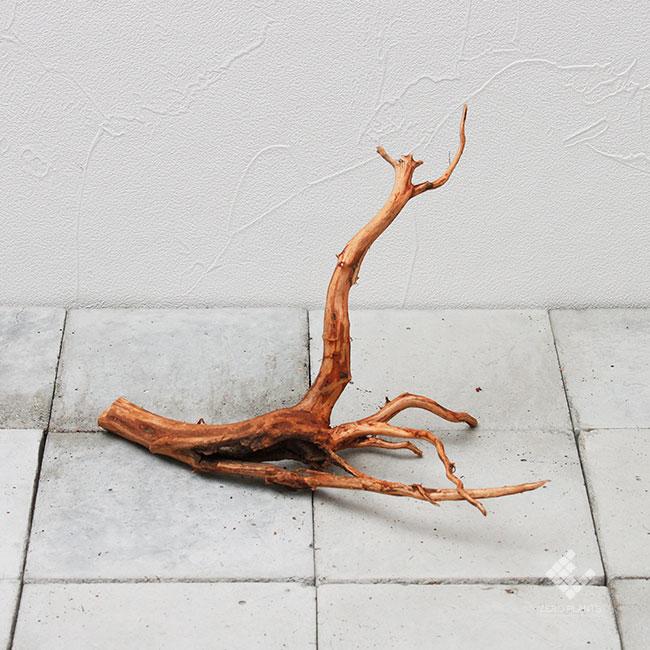 Drift Wood / ドリフトウッド 【 ブラウン / S / DW-019 】 [ パルダリウム、コケリウムのレイアウトに最適な流木 ]