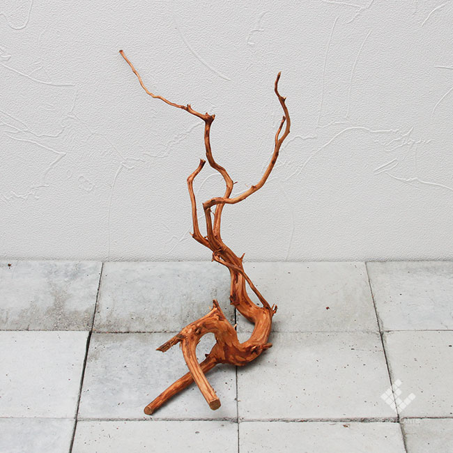 Drift Wood / ドリフトウッド 【 ブラウン / MS / DW-020 】 [ パルダリウム、コケリウムのレイアウトに最適な流木 ]