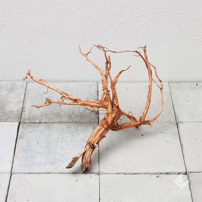 Drift Wood / ドリフトウッド 【 ブラウン / S / DW-023 】 [ パルダリウム、コケリウムのレイアウトに最適な流木 ]
