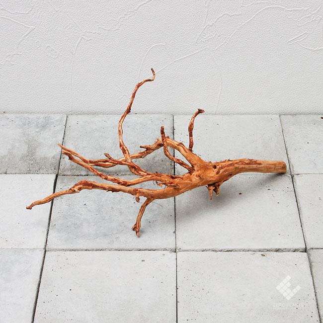 Drift Wood / ドリフトウッド 【 ブラウン / S / DW-024 】 [ パルダリウム、コケリウムのレイアウトに最適な流木 ]
