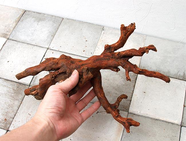 UWS Material Market / Sumatra Wood 【 スマトラウッド / 厳選流木 】 【 UMM037 】